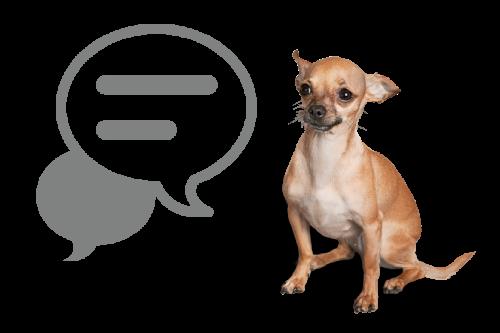 犬の保育園プレセア_アニマルコミュニケーション