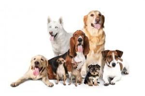 犬の保育園プレセア_デイ預かり